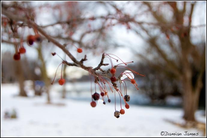 Christmas-01-web-A