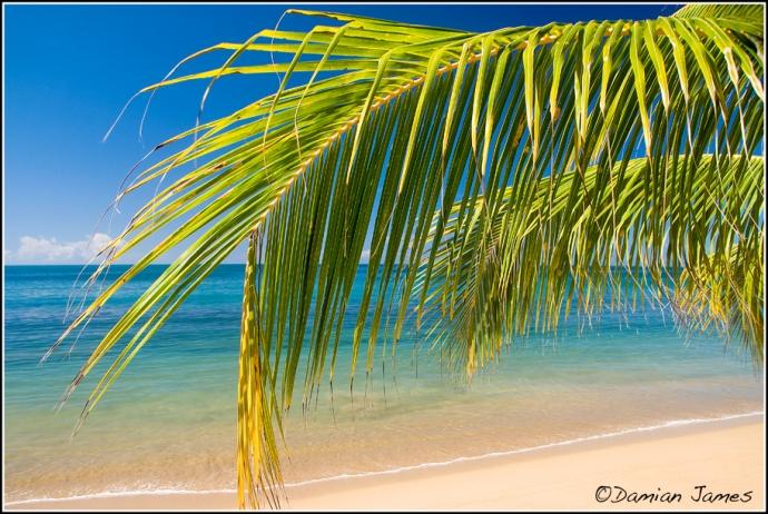 The Beach - 1